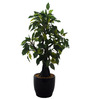 Fourwalls Green Polyester Artificial Ficus Bonsai Plant In Ceramic Vase