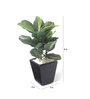 Fourwalls Green Synthetic Tall Artificial Mini Queues Plant with Vase
