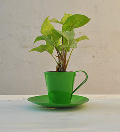Green Gardenia Table Top Metal Cup And Saucer Pot-Green