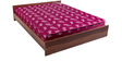 Free Offer - Kurlo Bond 5 Inches Queen-Size Thick Multi-Colour Coir Mattress by Kurl-On