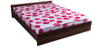 Free Offer - New Super Delux 5 Inch Thick Queen-Size Coir & Foam Mattress by Kurl-On