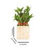Nurturing Green 2 Layer Big Lucky Bamboo Plant In White Raindrop Ceramic Pot