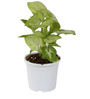 Sunrise 10 cm White Colour Planter Pot by Chhajed Garden