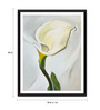 Tallenge Photographic Paper 18 x 1 x 24 Inch Modern Masters Collection Calla Lily Turned Away by Georgia O'Keeffe Framed Digital Art Print