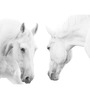 Hashtag Decor White Horses Engineered Wood 6 x 18 Inch Framed Art Panel
